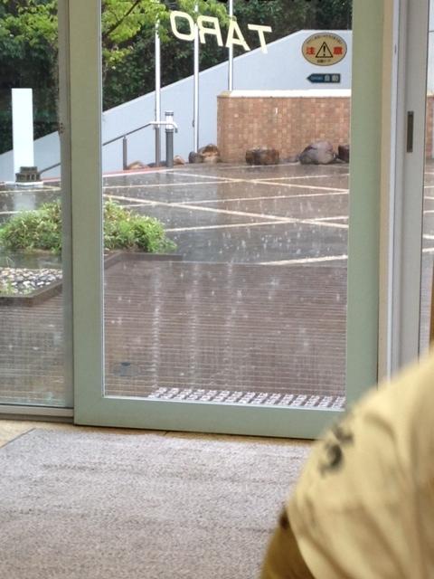 rainscatsanddogs